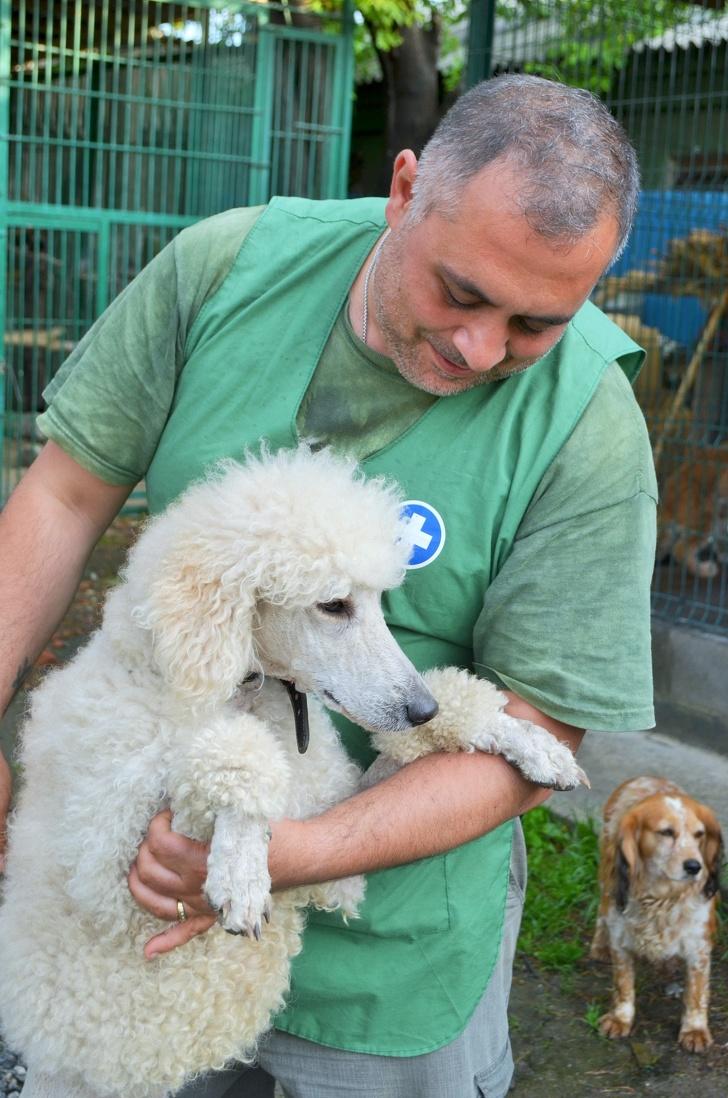 暖心獸醫「從死神手中」救回老虎 動物園卻「只想剝皮」他霸氣成立庇護所:我來保護牠!