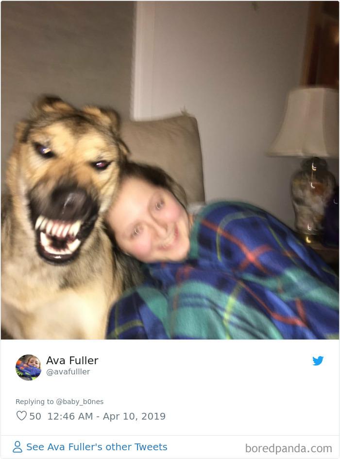 20張寵物「忘記維持玉女形象」的爆笑崩壞照 貓主子「吸貓草的表情」太母湯!