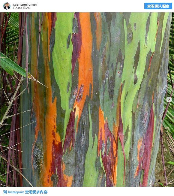 20個美到會讓「外星人嫉妒」的地球大自然奇景 天空「長出一棵樹」畫面超震撼!