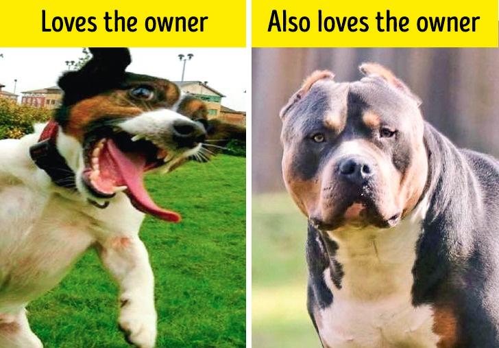 14個「人類自以為正確」的狗狗迷思 汪星人「打哈欠」主人就該小心!