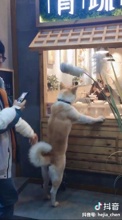 影/貪吃毛孩「緊盯客人吃拉麵」引3萬人爆笑 牠轉頭「超呆萌真相」網震驚:不是貓!