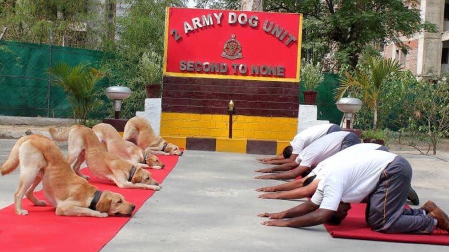 印度舉辦「國際瑜伽日」帶4萬人一起變軟Q 一整排傻汪「超整齊伸展」畫面好療癒!