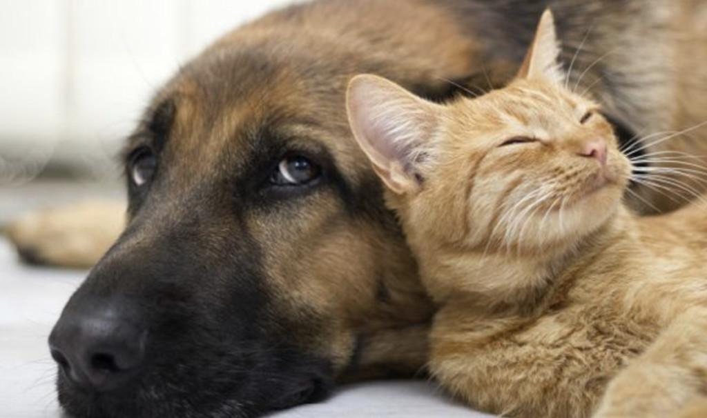 傳說「聞寵物的味道」可以抗癌?其實都是「翻譯惹的禍」別再被誤導了!