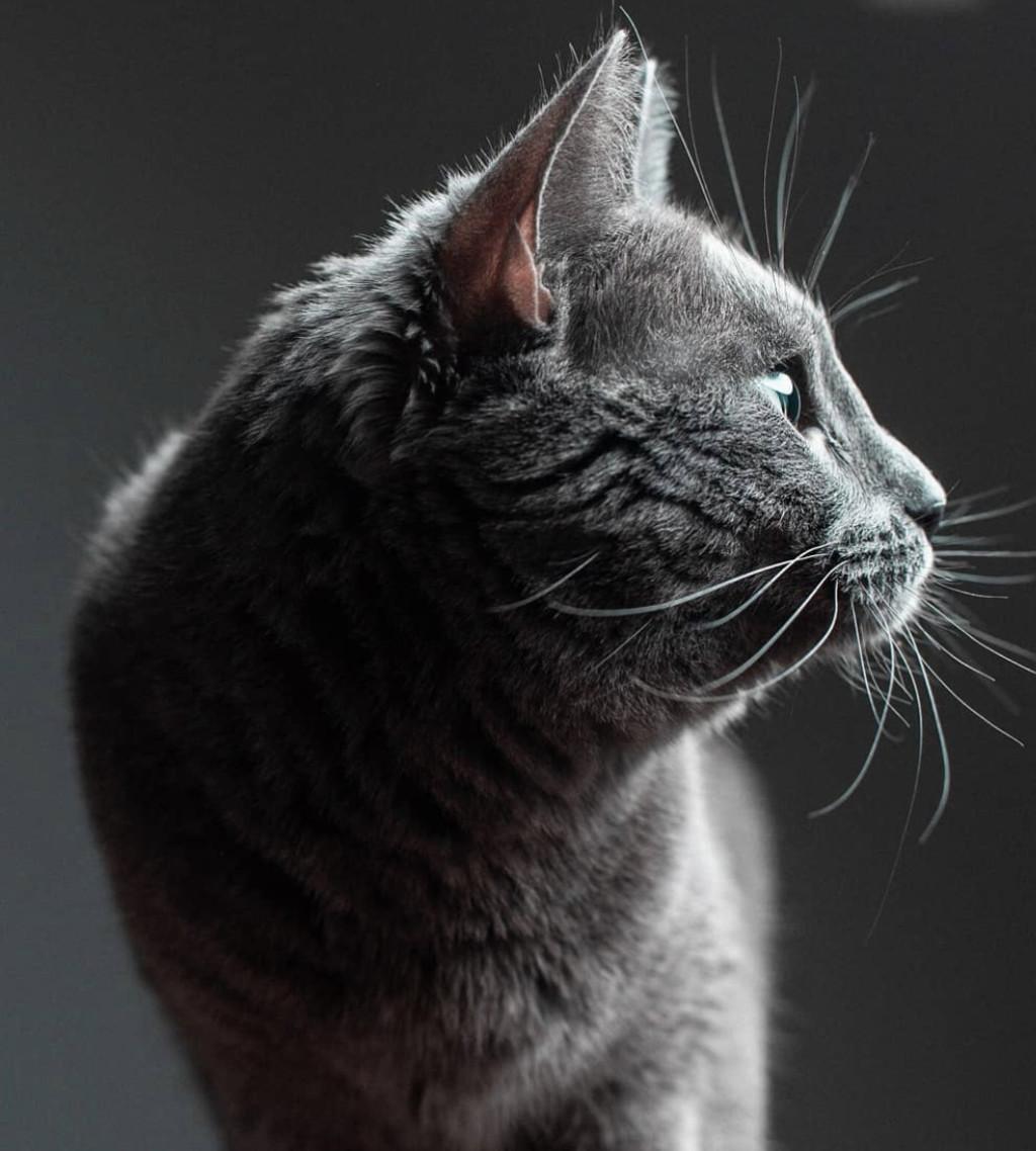 他請攝影師朋友幫忙照顧貓咪 結果直接得到「主子寫真系列」美到超驚艷❤