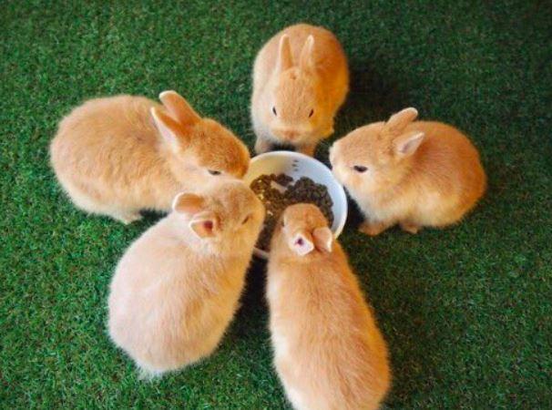 網瘋傳「兔子造型小籠包」的超療癒畫面 近看才發現「最萌真相」他:絕對不能吃!