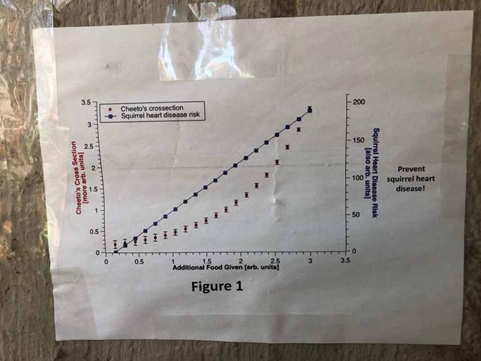 學生貼公告「禁餵這隻流浪貓」 附上專業圖表曝光「真實原因」網大推:問題很嚴重!