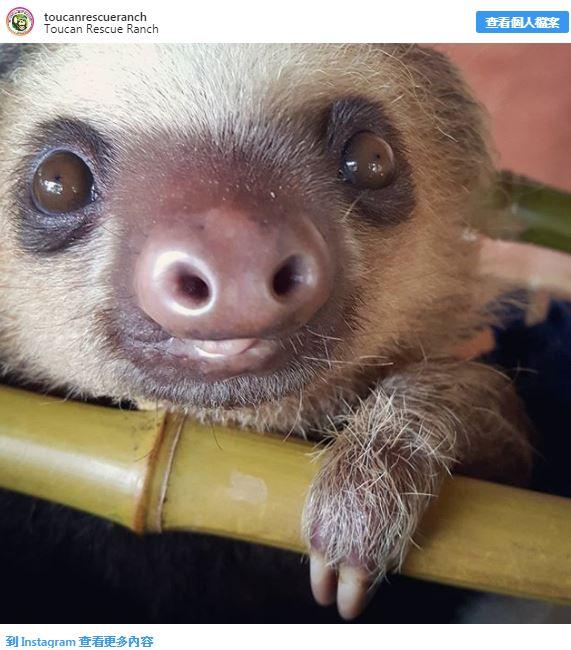 20張「毛還沒長齊」的超萌動物寶寶照 蝙蝠小時候超時尚!