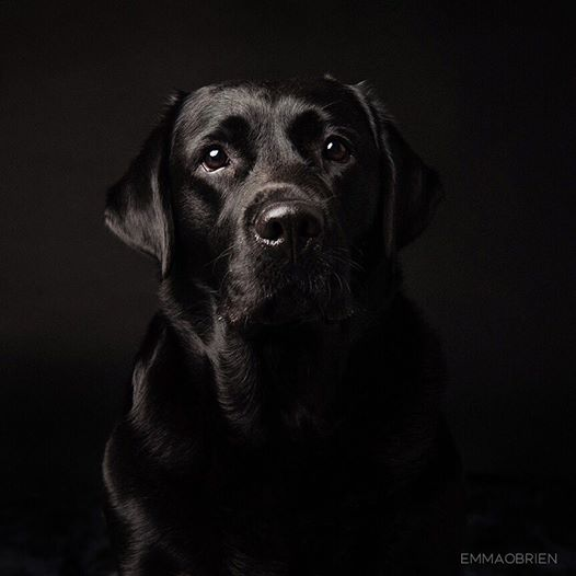 攝影師幫拍「黑漆漆寵物照」幾乎看不到 背後「超感人原因」被1.4萬粉絲讚爆!