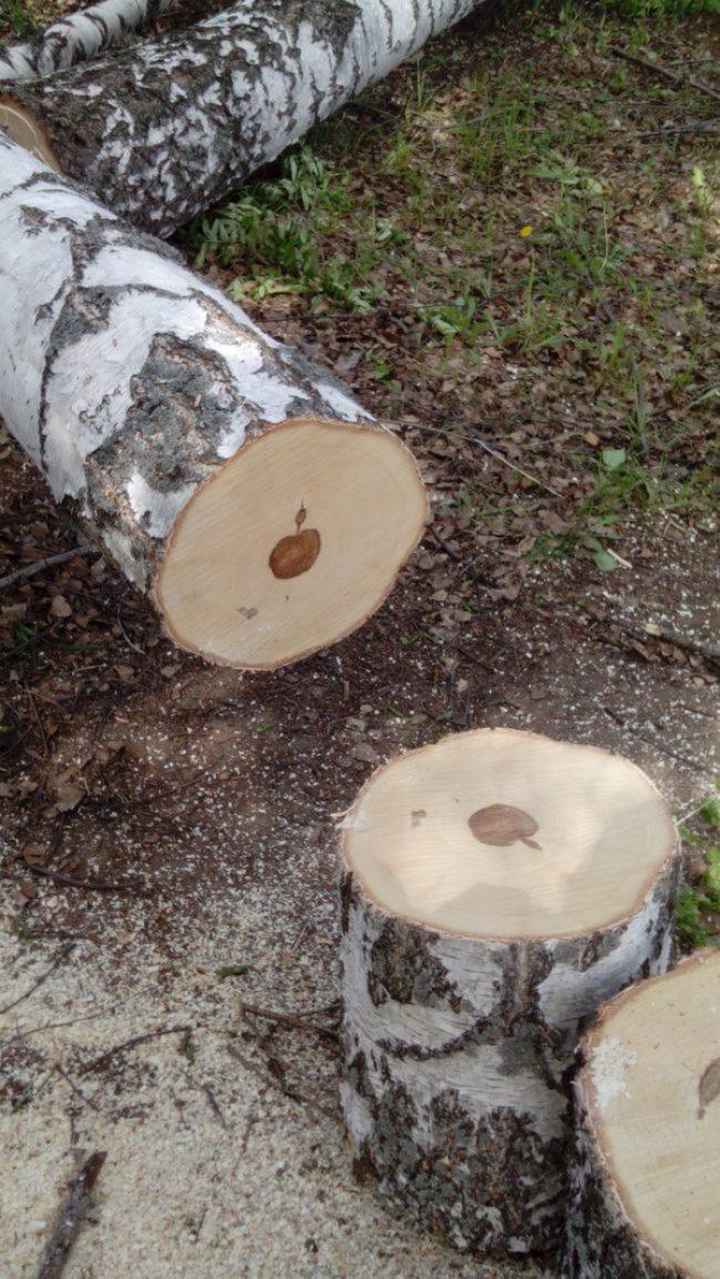 20張證明「大自然永遠超乎想像」的神奇照片 剖開樹幹後…竟然發現是蘋果製造?