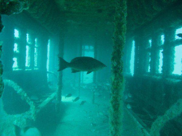 10張證明「海底擁有最深恐懼」的驚人照片 107年前沉沒的「鐵達尼號」令人鼻酸QQ