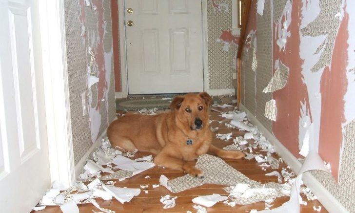 """20 cuốn sách huấn luyện thú cưng hiện tại bị """"bắt bởi chủ tại chỗ"""" đã bị xóa sổ hoàn toàn bởi nó!"""
