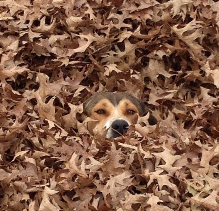 20個「比狗仔還會偽裝」的爆笑動物 牠「變成落葉」主人到現在還沒找到!