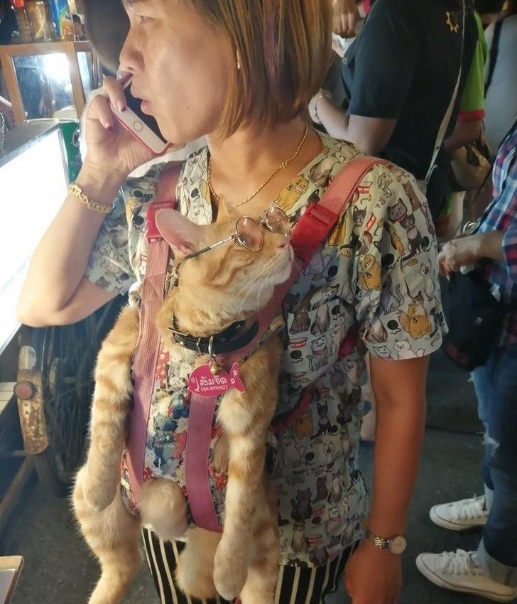 22位讓你懷疑「人類怎麼可以活到現在」的詭異人類 她竟然把「貓咪當圍巾」!
