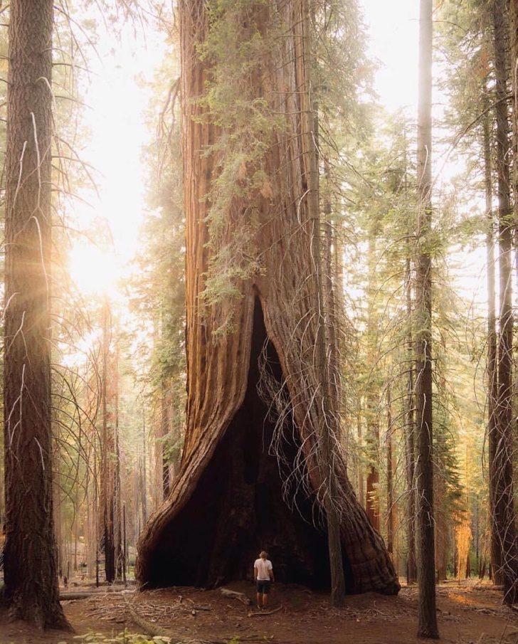 22個「特效也做不出來」的稀有自然奇景 巨樹把路標「吞進肚子」!