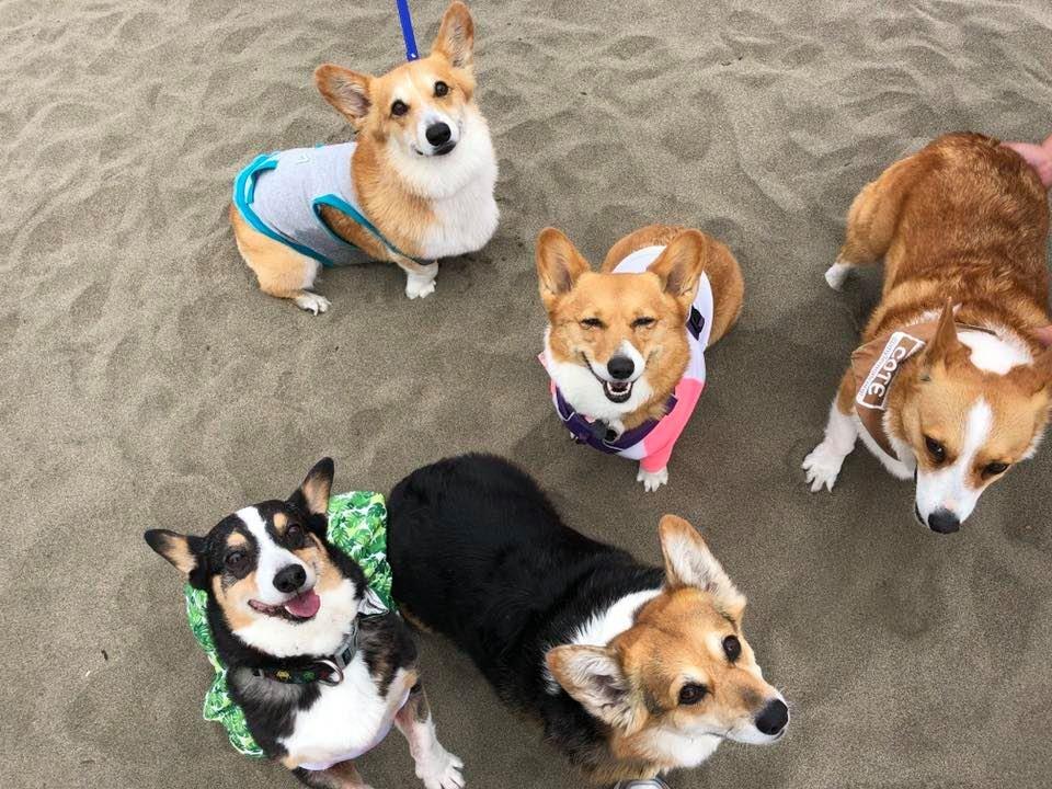 療癒年度盛事「科基沙灘日」熱鬧登場 1千隻「肥嫩土司蜜桃」塞滿沙灘!