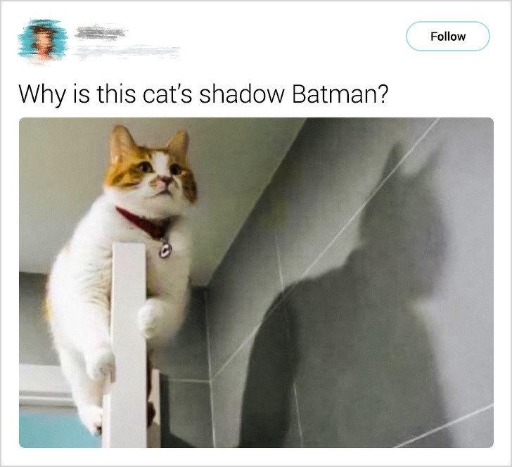 23張讓你「忍不住要養一隻」的寵物照 貓皇趴門上竟出現「蝙蝠俠」!