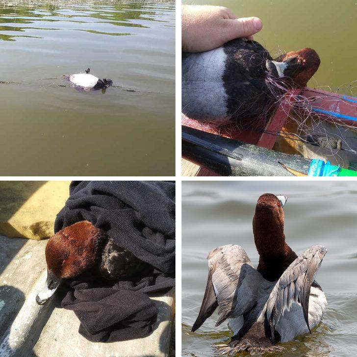 17張「不小心就把衛生紙用光」的超催淚照片 攝影師看到小鴨「困在漁網中」好心疼!