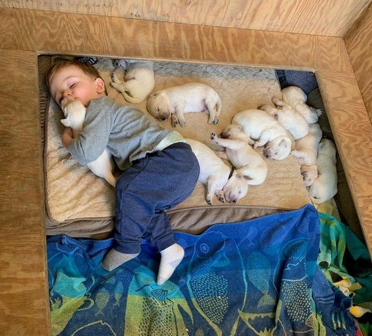 23張可以「說服老媽讓你養寵物」的超療癒照片 貓皇「飛撲討抱」沒人能抗拒!