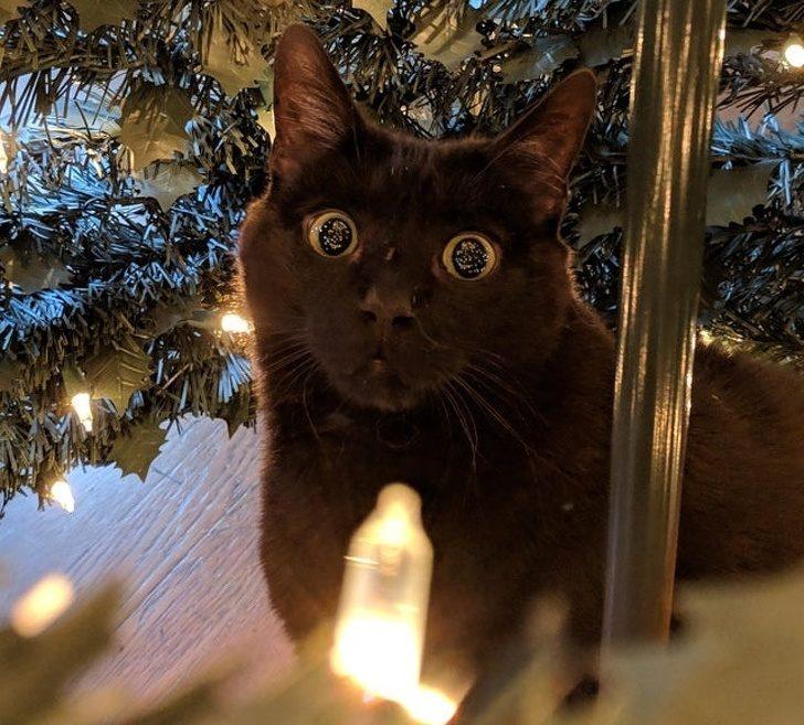 20張「毛孩大概都是外星生物」的爆笑動物照 當貓咪第一次見到西瓜...反應太狂了