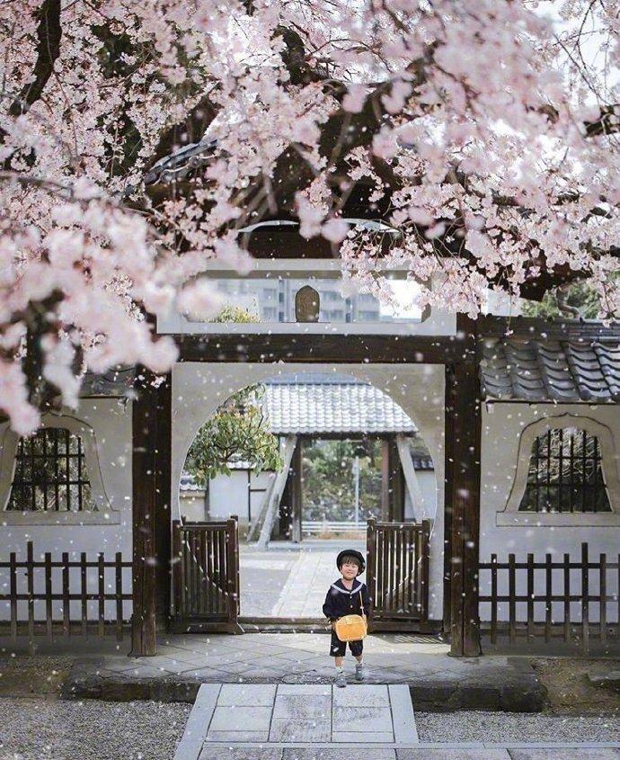 日本媽偷偷拍兒子拍了3年!從「菜鳥→大神」宮崎駿級美照震撼全網:根本童話世界