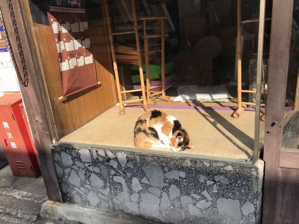 玻璃窗內出現「座墊+貓咪照」讓萬民網友淚崩:牠曾在這裏,被愛過!
