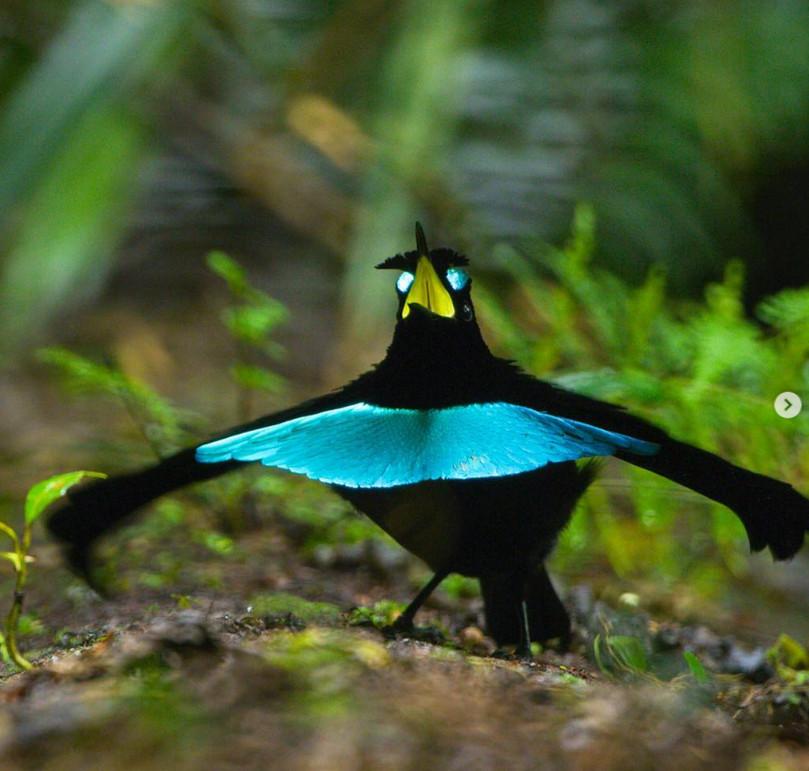 19隻「喝下變身水」的超強隱身術動物 竟然有把自己「變成鳥糞」的蜘蛛!