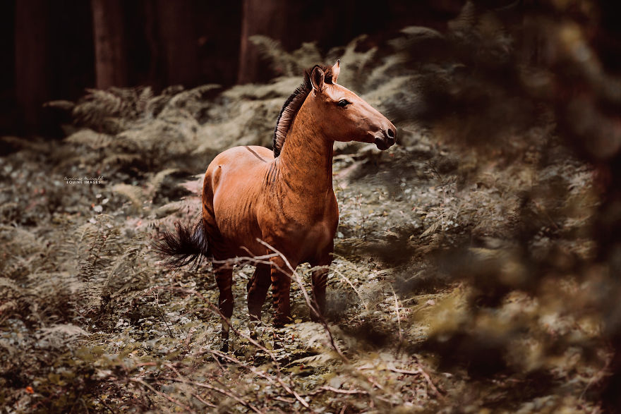 她拍到超罕見「斑馬+馬」的混血兒 下半身的「夢幻條紋」比《哈利波特》還狂!