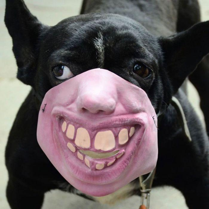 國外推「超獵奇人臉」的寵物口罩 網看到「水汪汪大眼+大黃牙」嚇壞:不要看我…