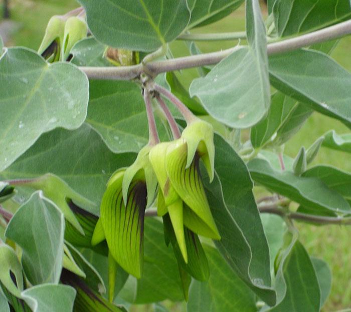 不是偽裝術!網驚現「蜂鳥變身」的神奇花瓣 放大看「超微小細節」驚呆:演化了