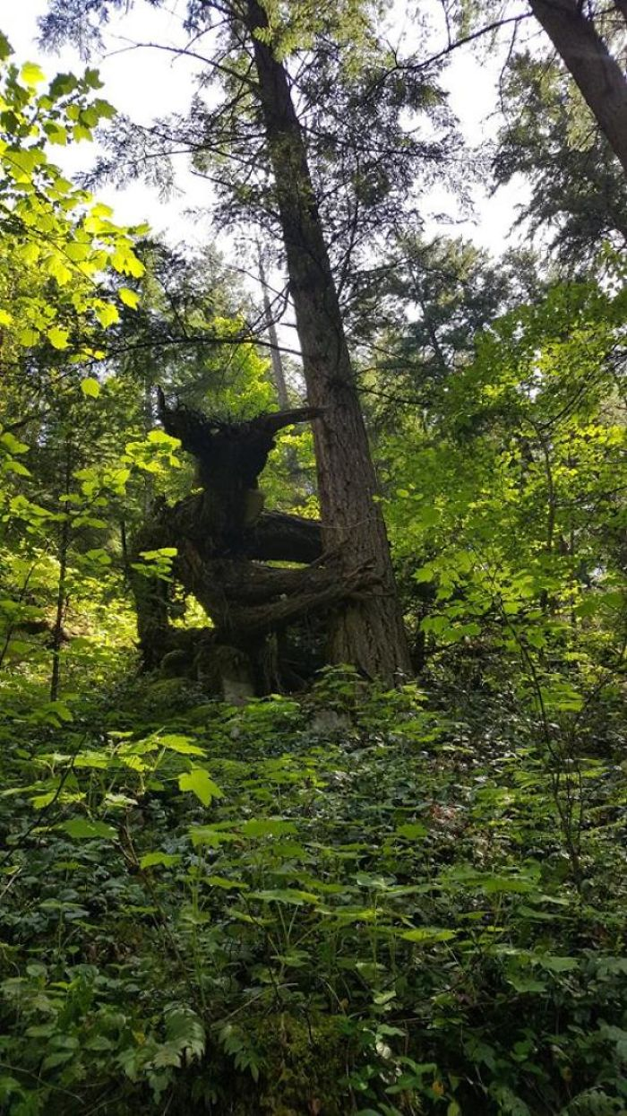 20張證明「此生一定要去森林探險」的神奇照片 他竟然發現超巨大的恐龍頭!