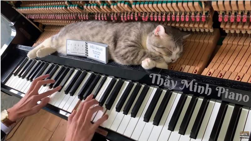 貓皇迷上在「奴才彈琴時」靠近 牠「被琴槌SPA」的爽樣超療癒!