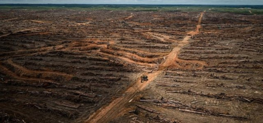 影/企業巨頭為謀取利益 瘋狂砍伐「一半巴黎面積」的森林…網暴怒:地球的未來誰負責?
