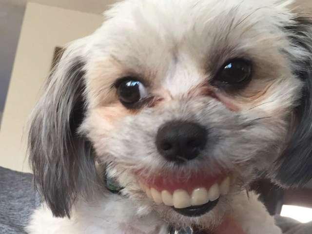 屁孩狗趁主人睡覺「偷走假牙」 笑容超詭異「側臉看」更獵奇!