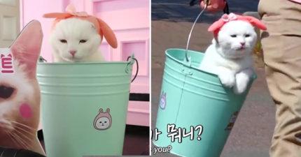 淡定貓堅持「住在水桶裡」跟奴才一起上下班 他揭開「出不來的原因」網支持:很用心!