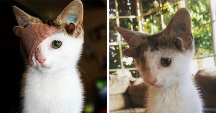 牠因為「天生長了4隻耳朵」被嫌棄!康復後變身「獨眼精靈」還找到家...表情太幸福了