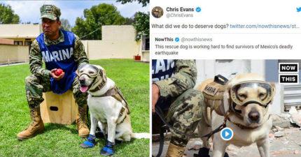 搜救犬「光榮退休」海軍送玩具大禮 超猛「救援紀錄」連美國隊長也認證!