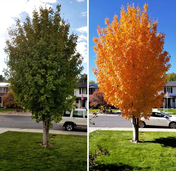 19張證明「時間可以改變一切」的超狂對比照 相隔「11天」樹葉竟然全變色了!