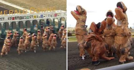 影/侏羅紀世界重現?國外瘋「暴龍賽跑」畫面超魔性 全體「歪頭狂奔」場面太失控!