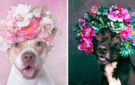 攝影師拍下「最兇猛惡犬」的夢幻花圈照 超恐怖「比特犬」其實是最溫暖花仙子!