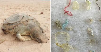 泰國海灘驚現斷氣的5歲海龜 獸醫「打開真相」秒鼻酸:人類太丟臉!