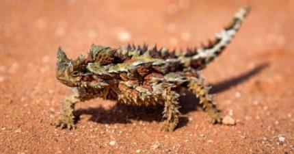 牠是世界上「最醜」的動物 一次能吃掉「1800隻」螞蟻…身價貴到被怨:只有富豪買得起!