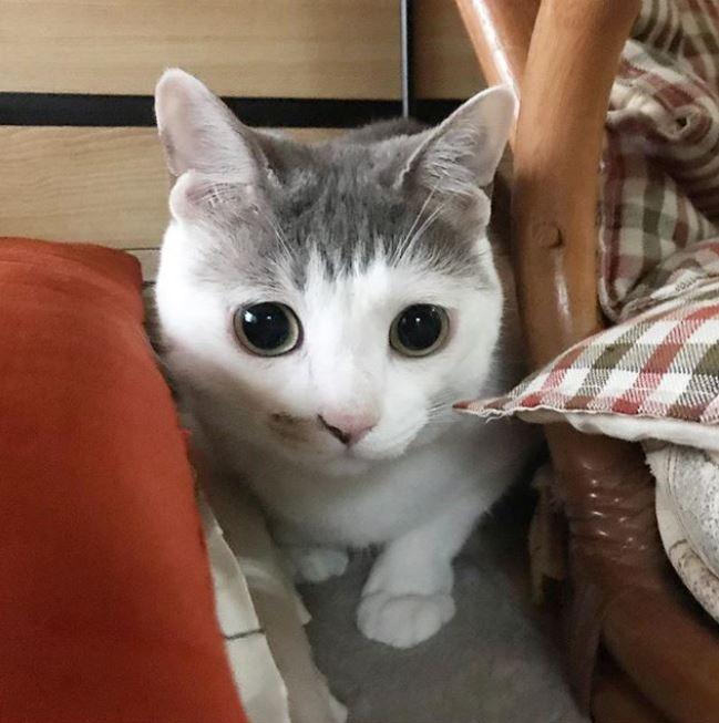 萌貓自帶「剪壞感瀏海」全網爆紅 唇邊「女神必備特徵」被狂讚:超想帶回家❤