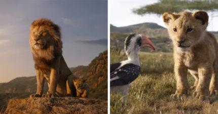 《獅子王》首波影評不如預期!外媒批「沒有靈魂的電影」:畫面是最大問題