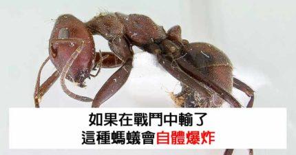 14個「生物老師捨不得告訴你」的驚奇冷知識 雌袋鼠的「二頭肌」竟是最大魅力點!