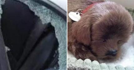 他發現「後座放的玩具」害車窗被砸碎 揭開犯人動手的「暖心原因」網友:不能怪他!