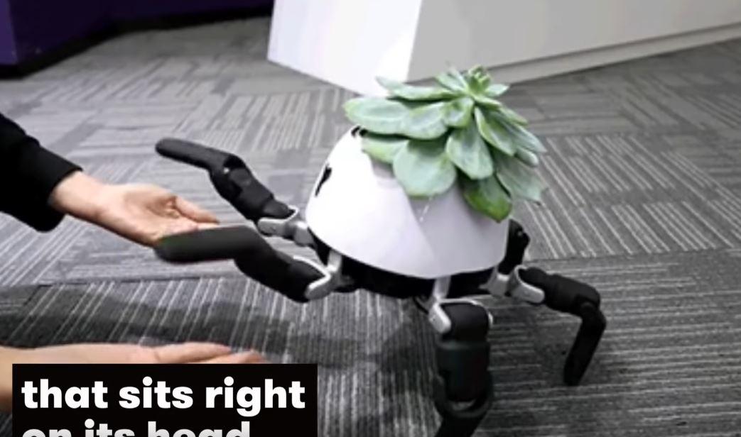 日本發明會「遛植物」的機器人!自動背植物曬太陽 還加碼「萌寵系技能」互動超可愛~