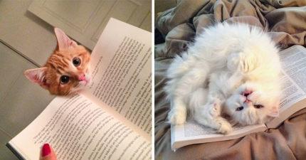 貓咪才沒有只把你當奴才!他測試「罐罐v.s主人」抉擇結果超感人:沒白疼惹QQ