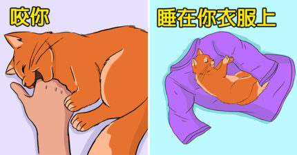 10種傲嬌貓皇在對你說「我愛你」的小舉動!你有看過牠「瞇起眼睛」嗎?