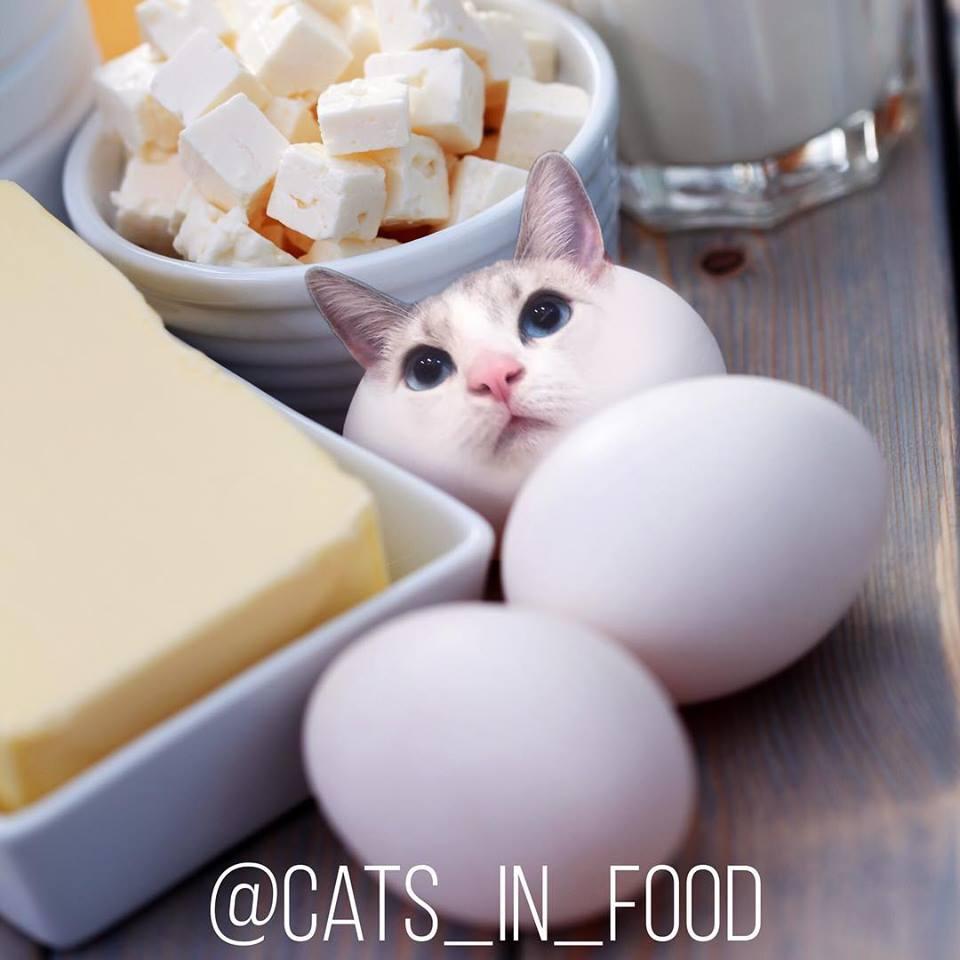 他把「喵星人→食物」獵奇V.S可愛違和感滿滿!「喵星冰淇淋」網不捨:怎麼可以吃貓咪~