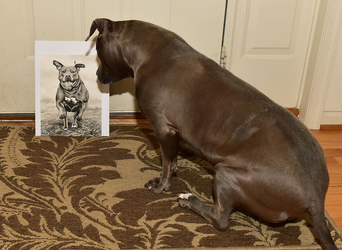 藝術家繪出「連主人都分辨不了」的超寫實寵物肖像 近看「毛髮細節」驚呆:牠在看我!
